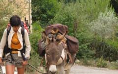 Balade avec un âne d'une journée