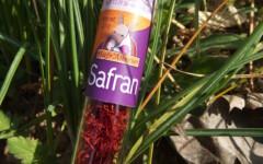 Filaments de safran